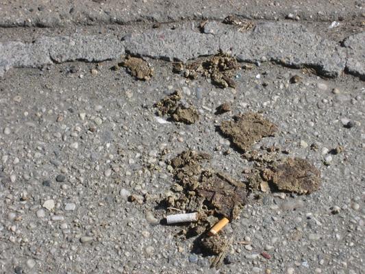 dogshitandcigarettes