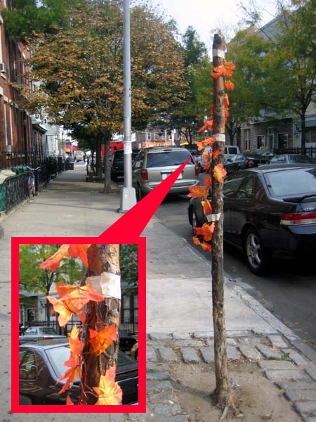 A Tree Grows In Greenpoint