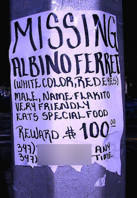 Flakito the Flushing Ferret