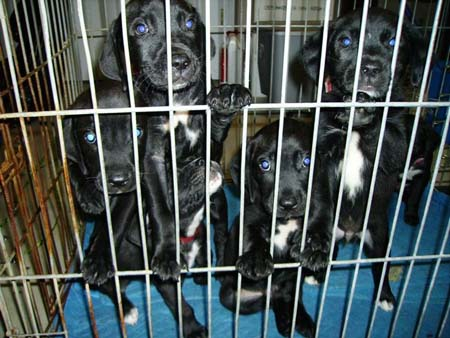 Puppies in Prison