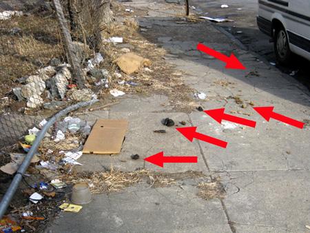 Melrose Street Shit