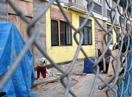 Dogs at 325 Kosciusko Street