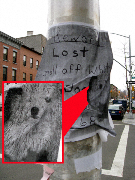 Lost Dog, Revised