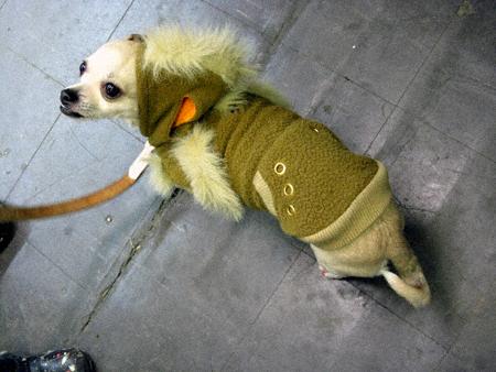 Mordred models her hoodie