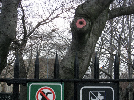 The Asshole Tree