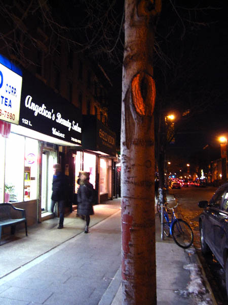 bedford-ave-tree