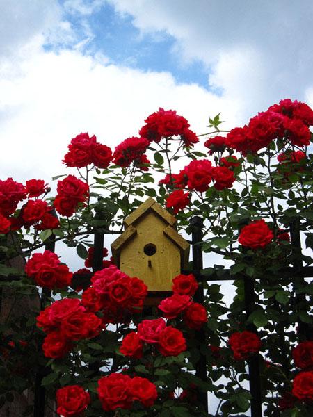 golden-bird-housenys