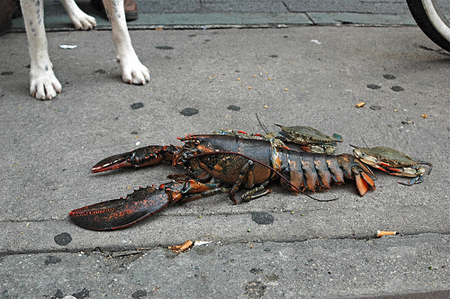 crustylobsterMOUSEYBROWNnys