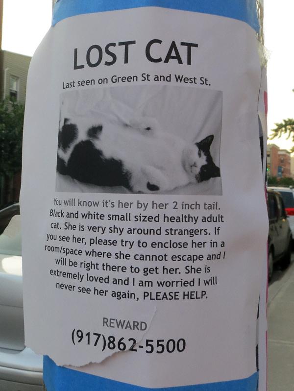 lostcat