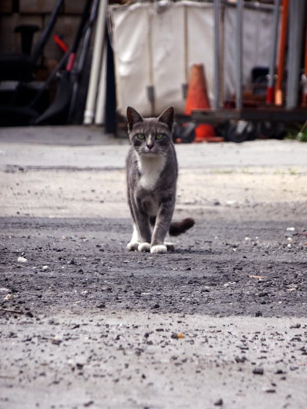 Gowanus Cat NYS
