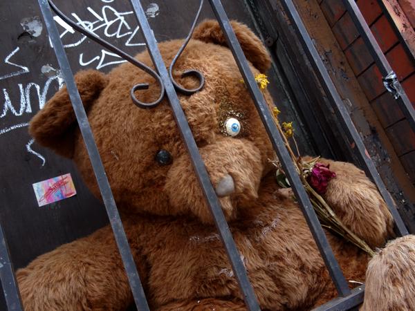Jailbear 7162014 NYS