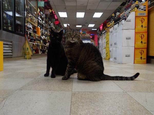 Bagheera and Chupi nys