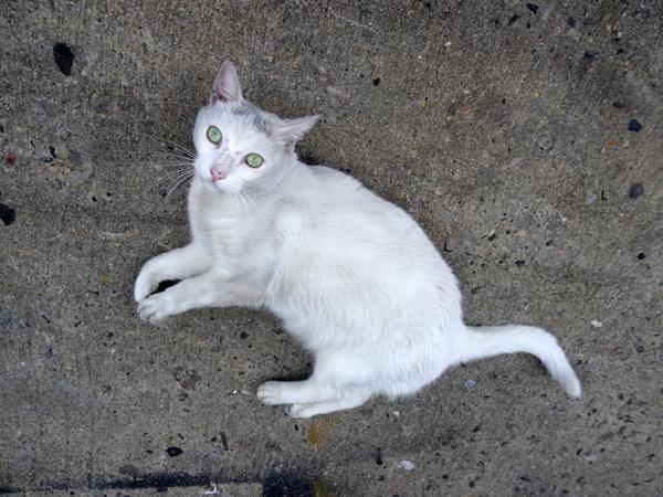 Meserole Street Cat 2 nys