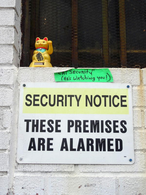 Cat Security NYS