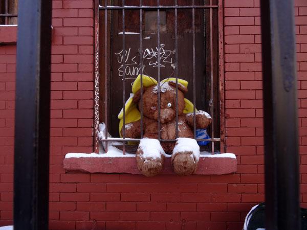 Prison Bear nys