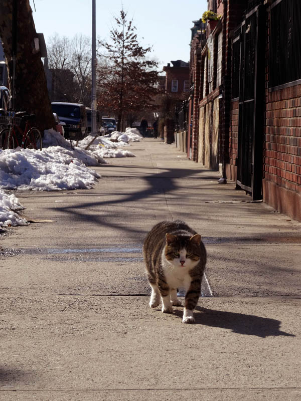 Quincy Street Cat 3 nys